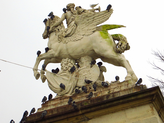 """Pigeons seeking shelter from wintry winds on the other side of a statue of a horse atop a gate in the Jardins de Tuileries"""